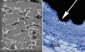 Content_Bild3-endolif-o-cage_light_optical-micrographs_568x350